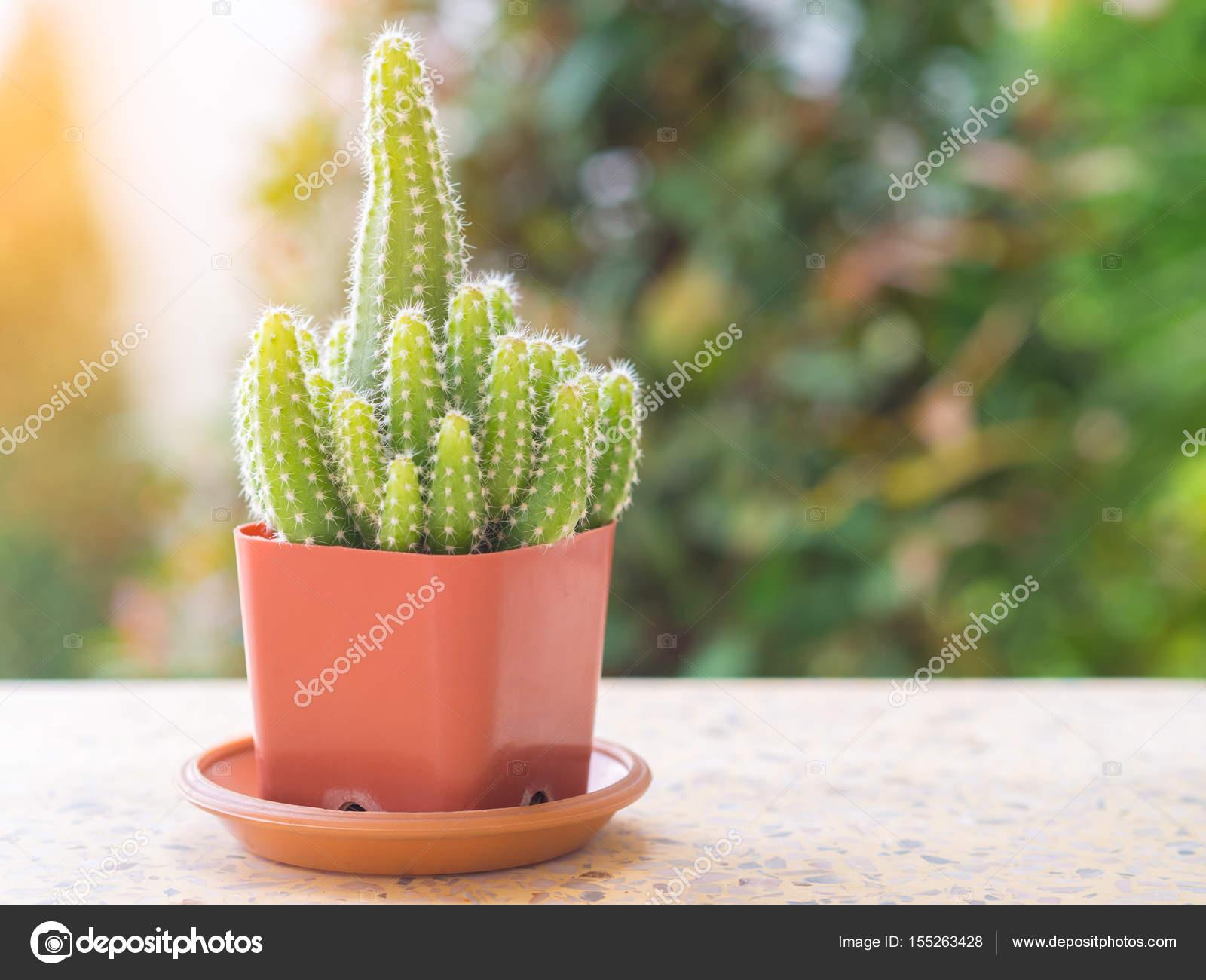 Boom In Pot Op Balkon.Cactus Boom In Een Pot Geplaatst Op Een Balkon Stockfoto