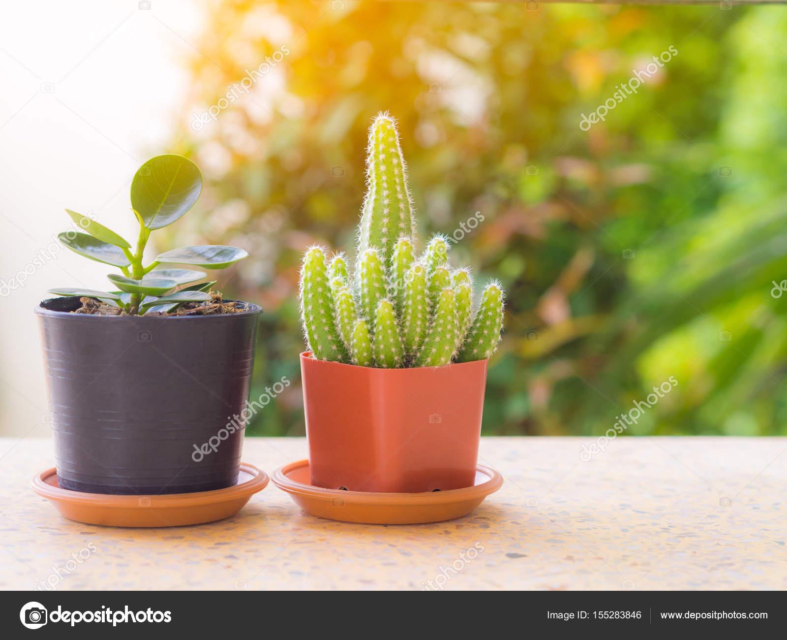Boom In Pot Op Balkon.Boom En Cactus Boom In Een Pot Op Een Balkon Geplaatst Flare Licht