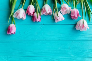 fresh pink tulips