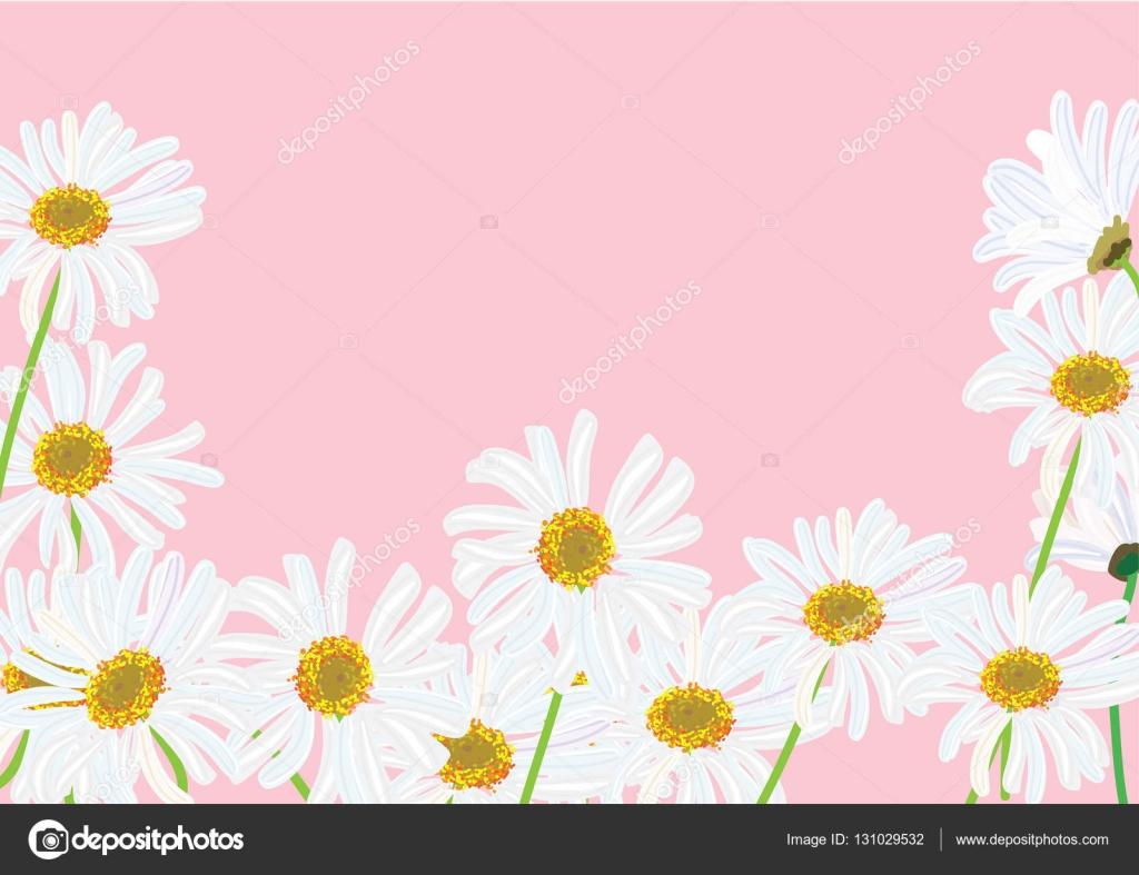 Blanca Margarita flores con helecho para ilustración de vector de ...
