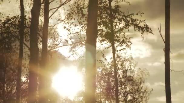 siluety stromů proti pozadí podzimní obloha timelapse