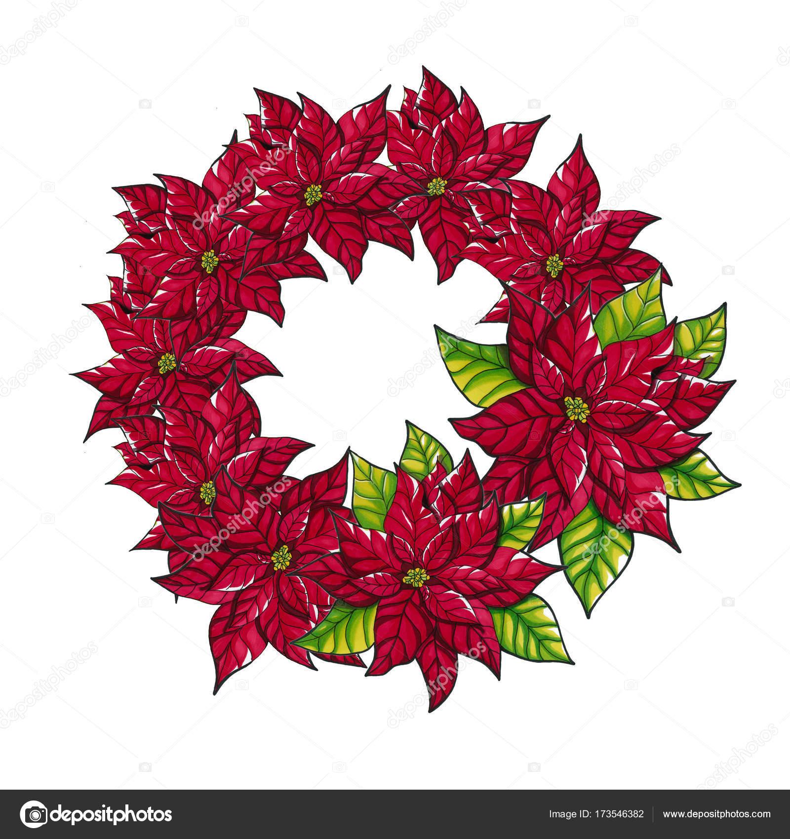 Stella Di Natale. Fiori Del Poinsettia Di Natale U2014 Foto Stock