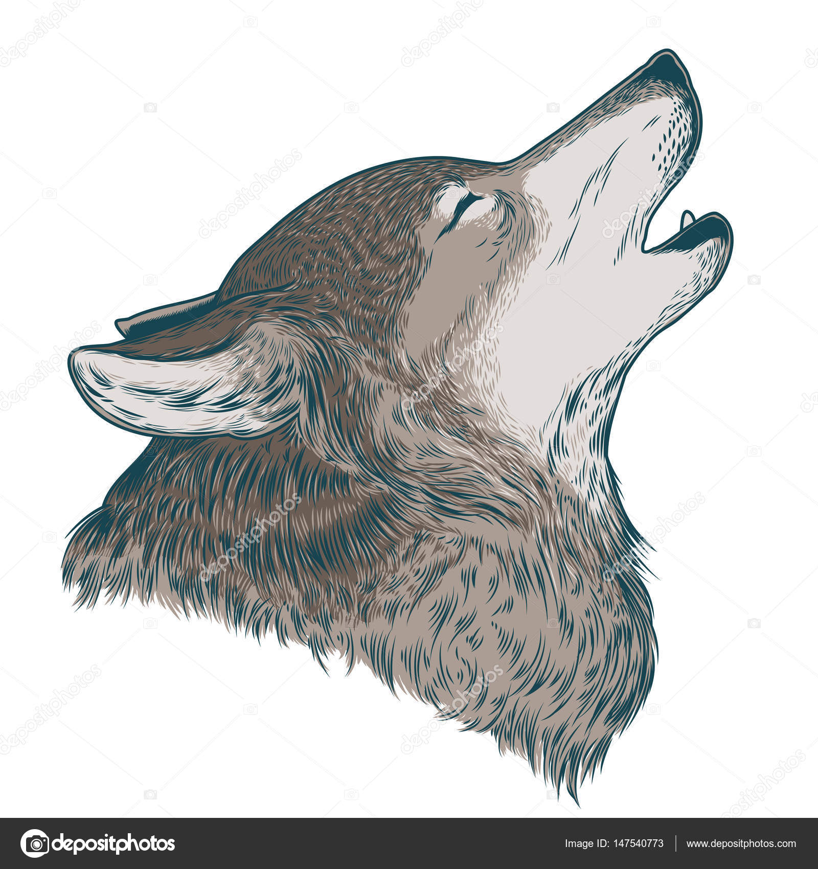 Vector Illustration Of A Howling Wolf Stock Vector