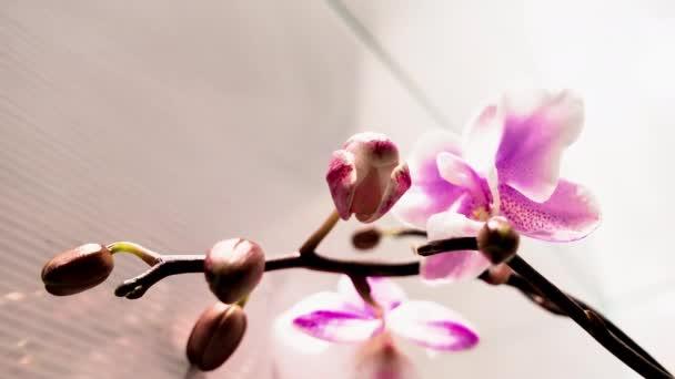 4k Orchid květy