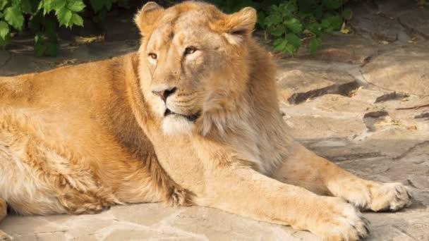 furry male