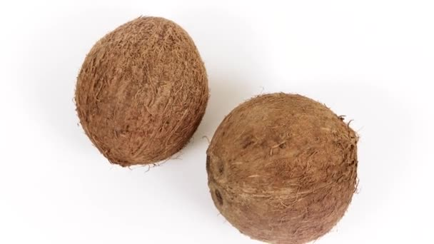 Two ripe whole tropical coconuts rotating on white background. Tropical fruits. Isolated, loopable