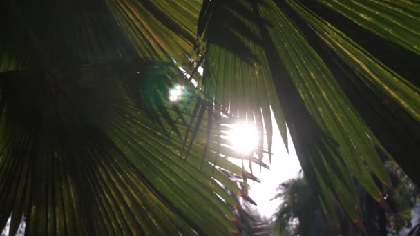 Sonnenuntergang im asiatischen Park. Sonne scheint durch die grünen Blätter der Palmen. Sanfte Brise schwingt Blätter