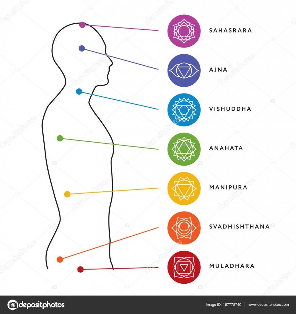 chakra system of human body chart  seven chakra symbols  location  information of each chakra  chakra centers — vector by moibalkon