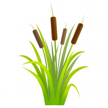 Water Reed Plant Cattails Green Leaf. Vector