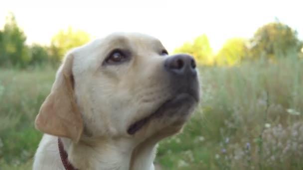 schöner Hund, der sich auf der Natur ausruht