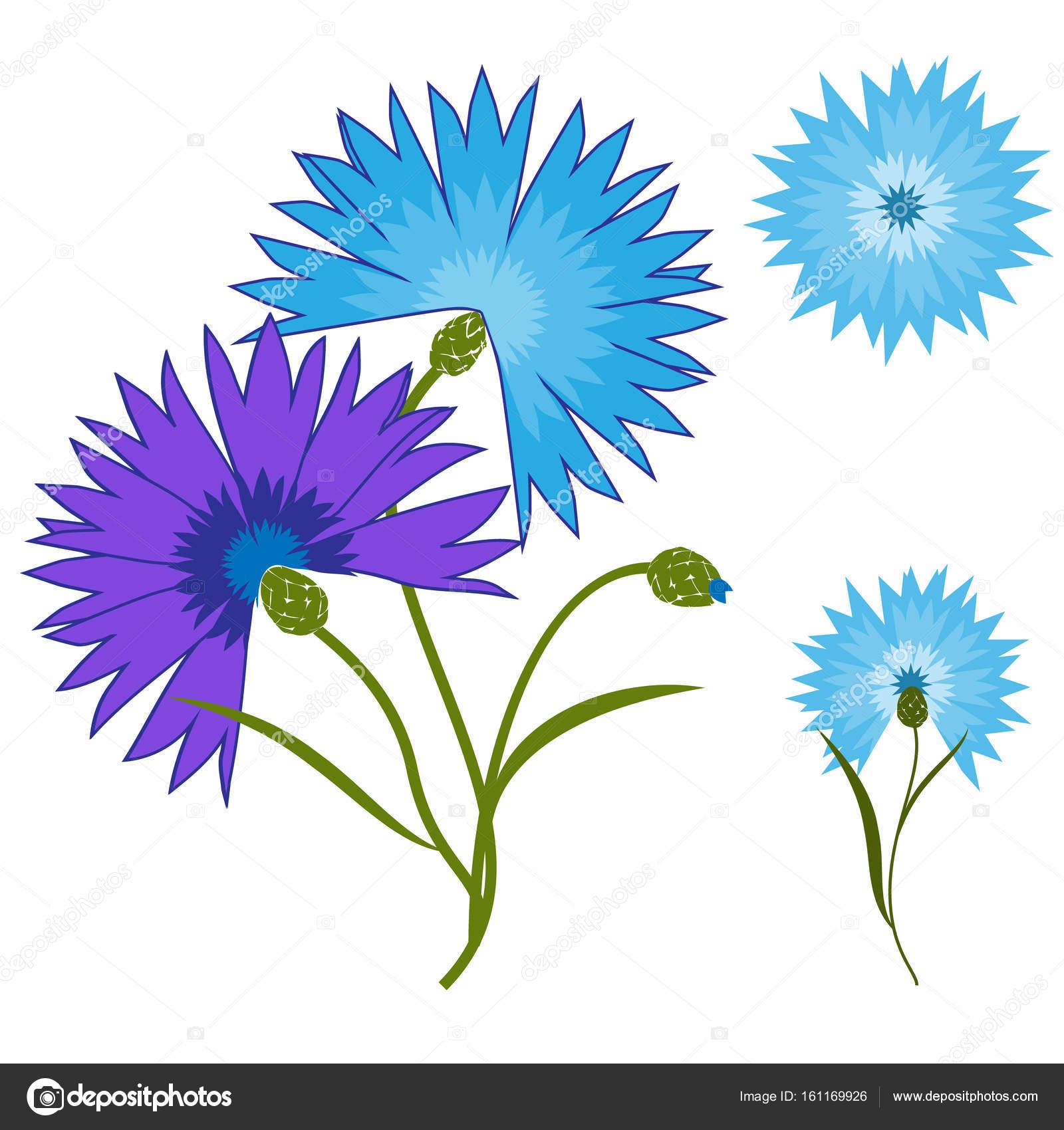 Bleuet Fleur Bleue Isole Sur Fond Blanc Illustration De Dessin