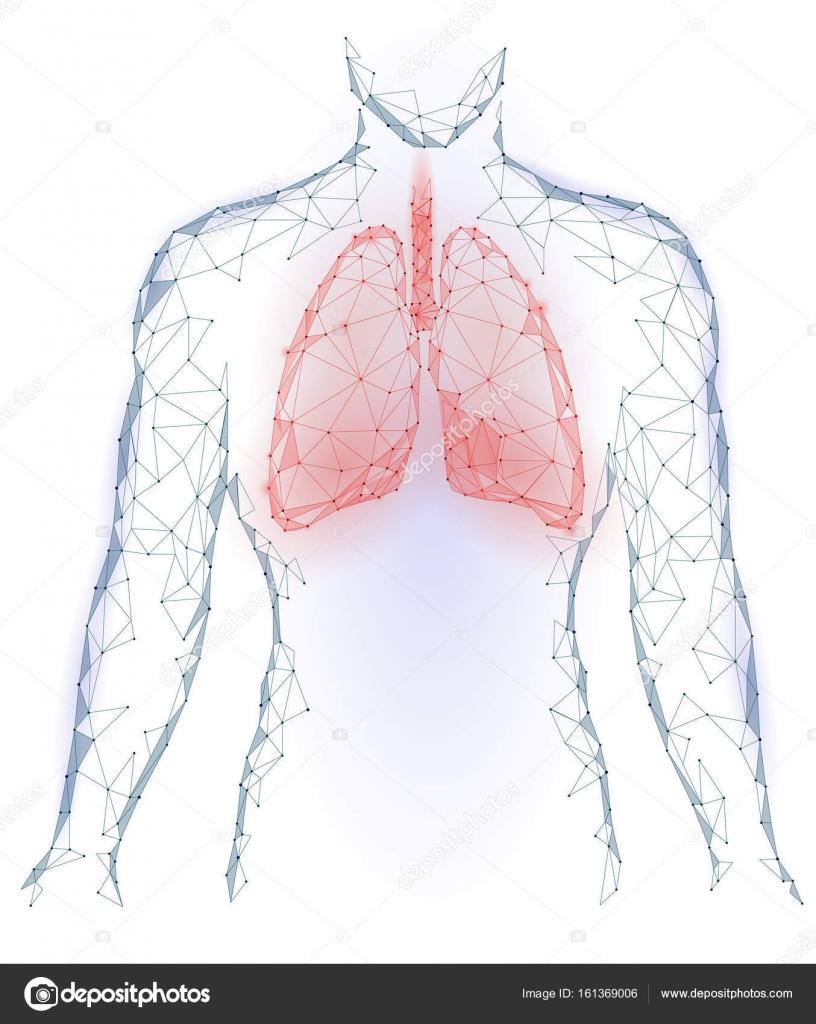 Menselijke longen pulmonaire infectie inwendige organen. Respiratory ...