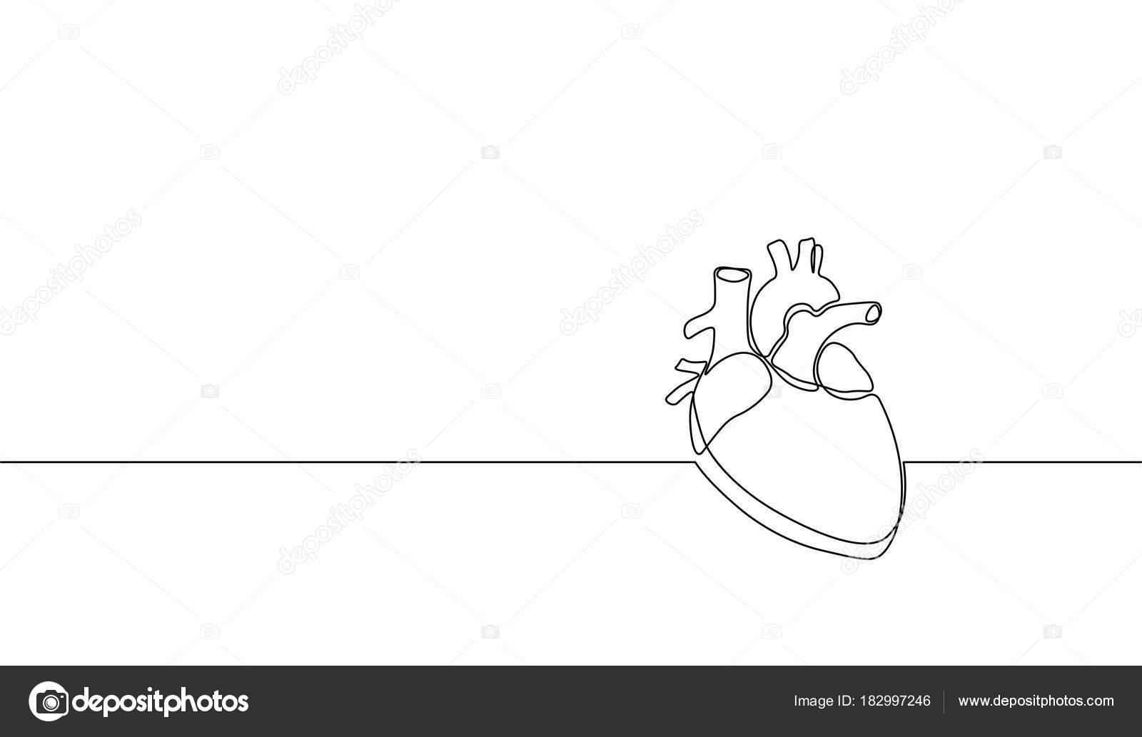 Silueta de corazón humano Anatomía arte sola línea continua ...