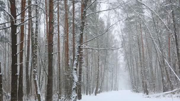 Sníh v listnatém lese na pozadí zasněžených stromů