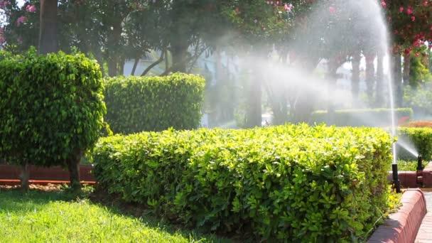 Zavlažování trávníku ve spreji automatického zavlažovacího systému