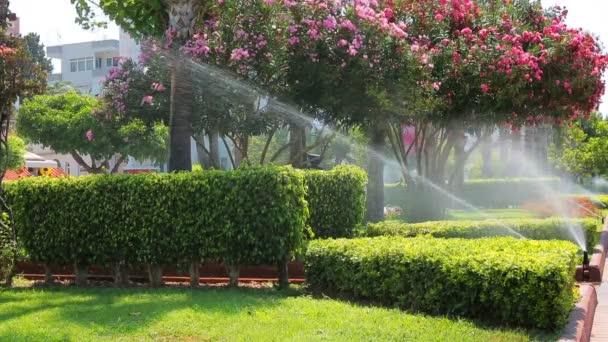 Rasenbewässerung im Spray einer automatischen Bewässerungsanlage