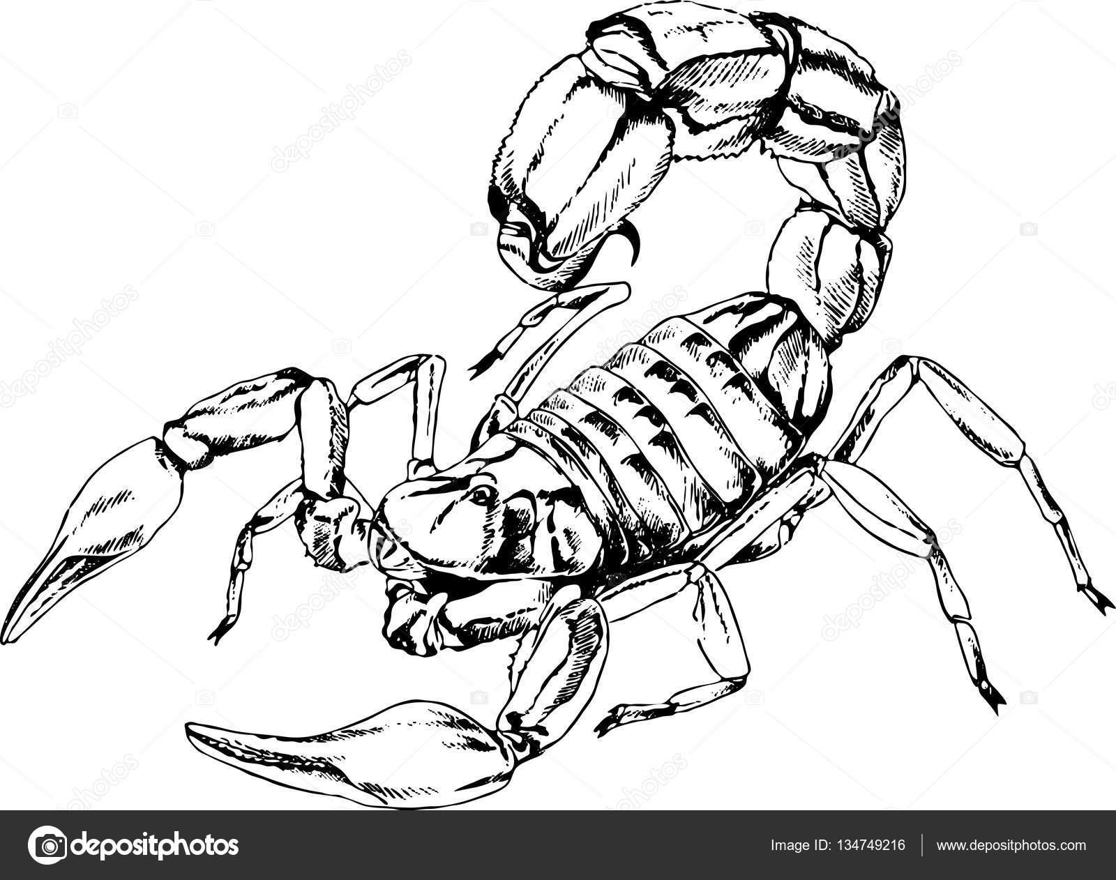 Skorpion Ist In Tinte Tattoo Gezeichnet Stockvektor Evgo1977
