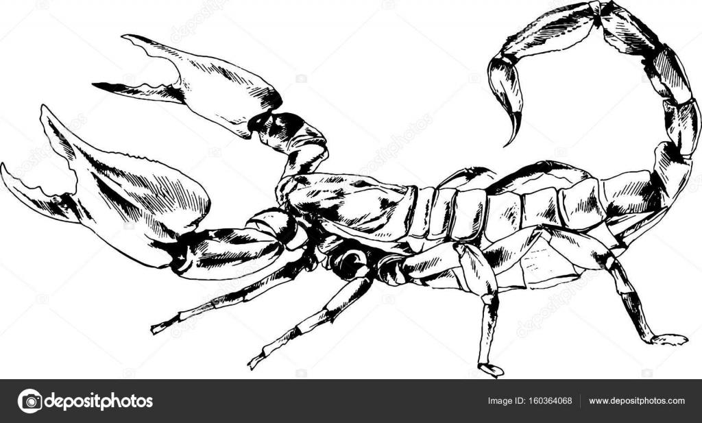 Stürmer Skorpion Mit Einem Giftstachel In Tinte Von Hand Gezeichnet
