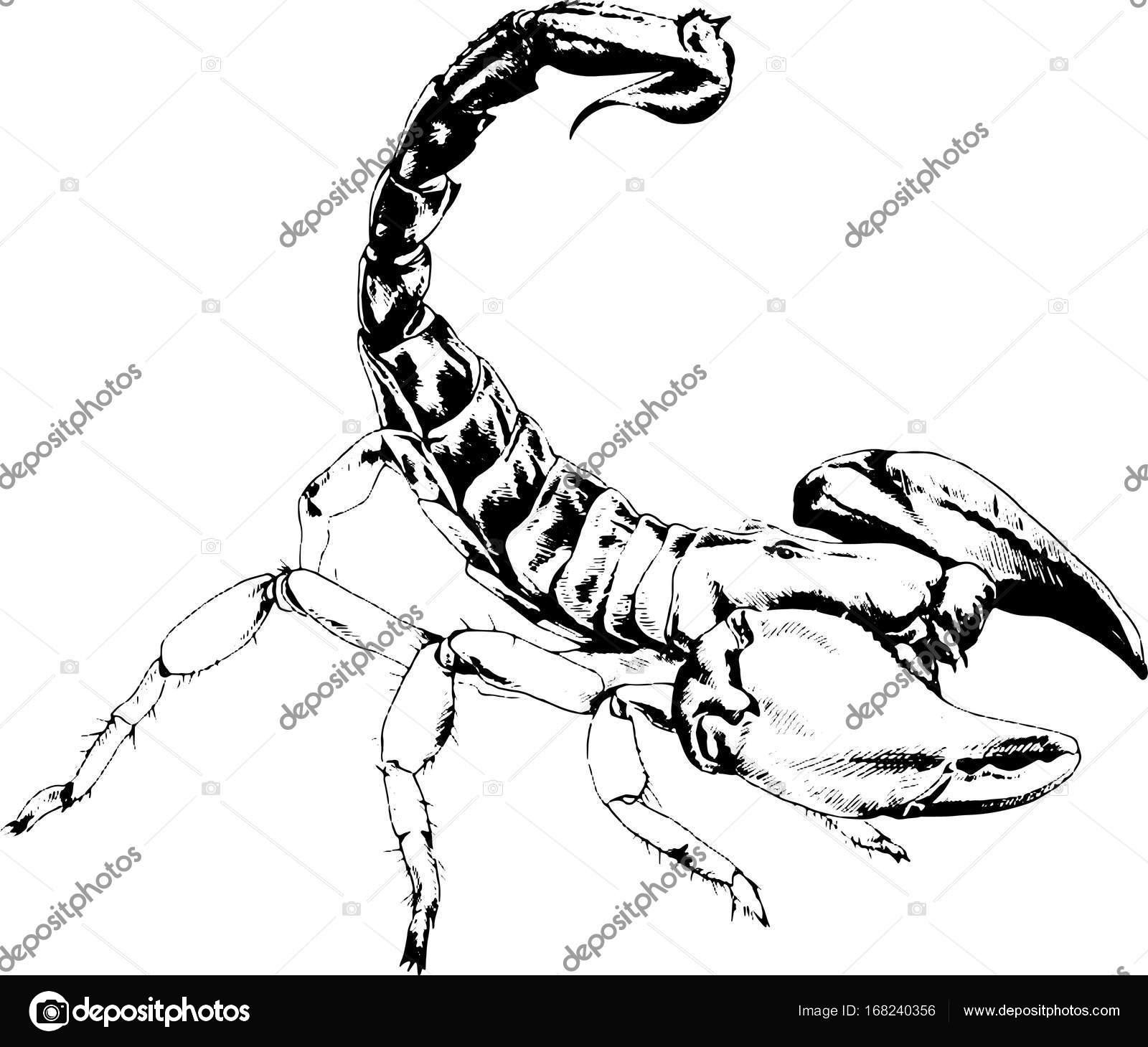 Skorpion Ist Mit Tinte Tattoo Gezeichnet Stockvektor Evgo1977