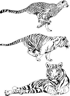 set of vector drawings on the theme of predators are drawn by hand with ink tattoo logos