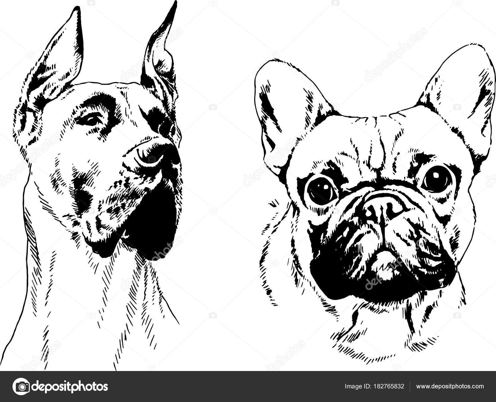 Vectores Dibujos Dibujos Perros Raza Las Rejillas Dibujadas Mano