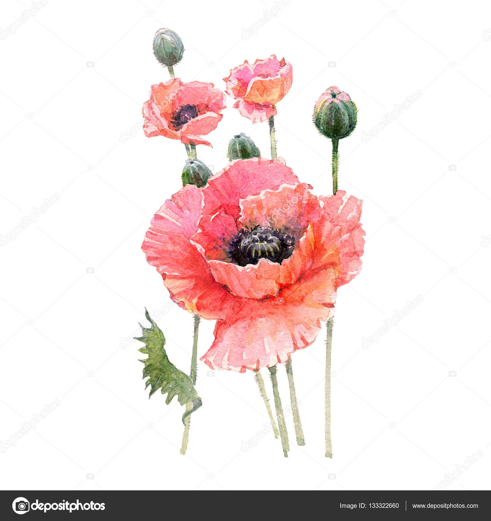 Top Watercolor Red poppy flower bouquet isolated — Stock Photo  FI67