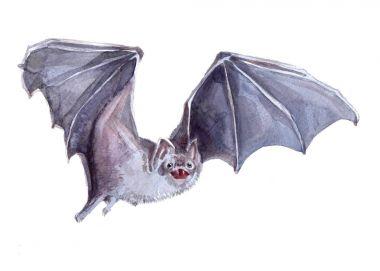 Watercolor single Bat animal isolated
