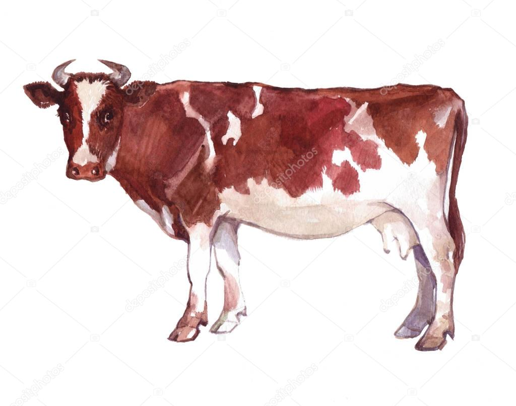 Watercolor single cow animal isolated