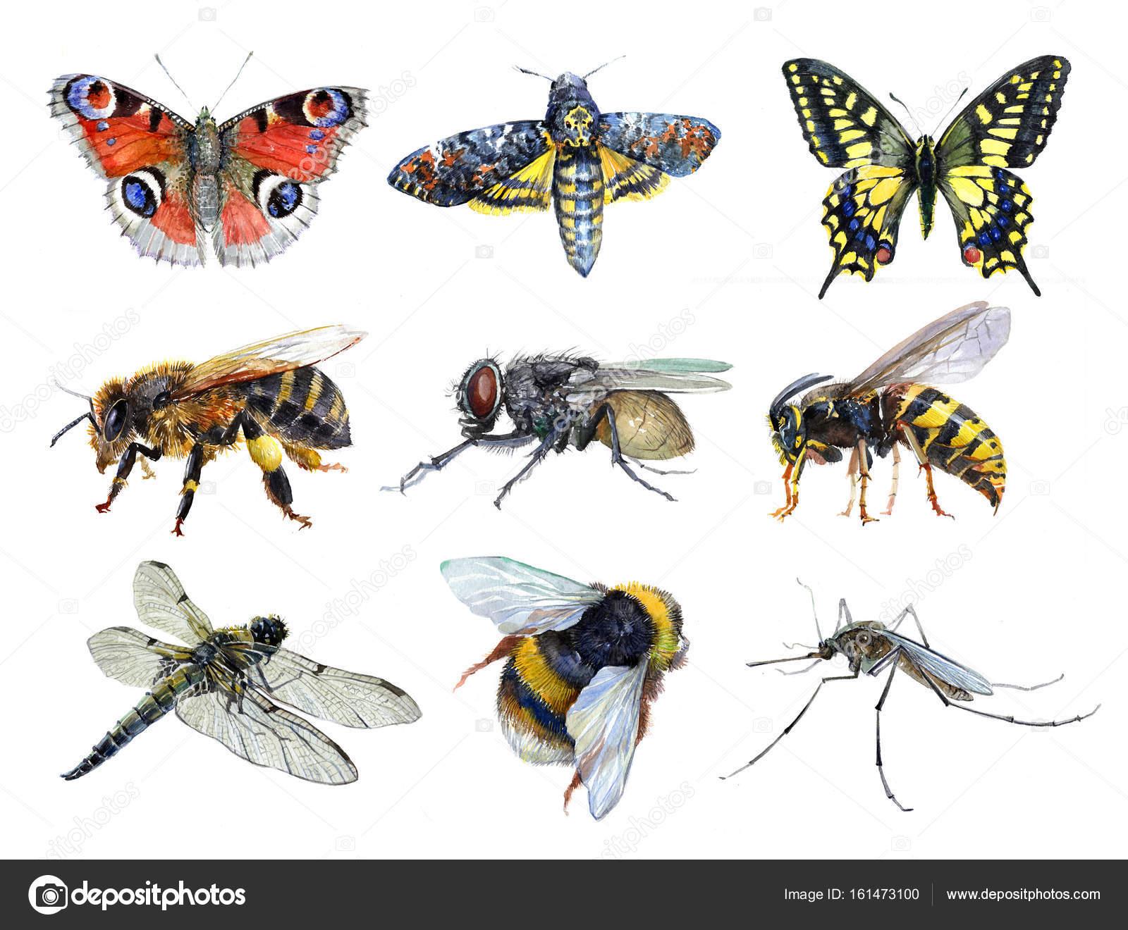 Aquarell-Set von Insekten Tiere Wespe, Motten, Mücken, Machaon ...