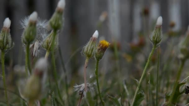 Vysoká tráva a kytice