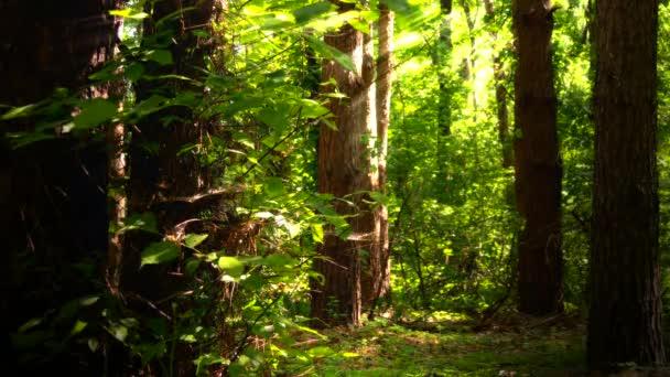 Madera, bosque, árboles, hojas de color verde, verano, naturaleza ...