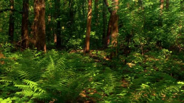 Dřevo, Les, stromy, zelené kapradí, léto, příroda, kapradí, 2