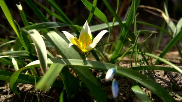 Yellow, Blue flower, spring
