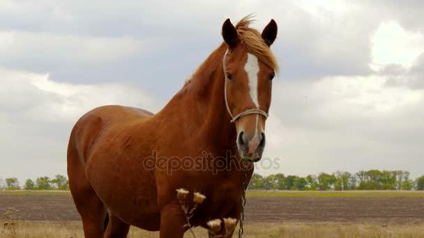 ló a mezőn
