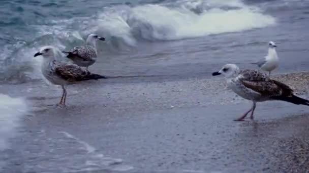 Möwen an der Schwarzmeerküste. Wellen. Sandstrand