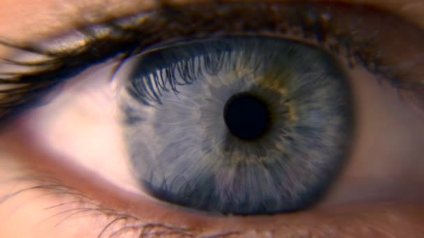 Nahaufnahme. Makroblaues weibliches menschliches Auge. Pupille Hornhaut Iris Wimpern. Blinzeln offen geschlossen. 30p Zeitlupe 1 / 2 Echtzeit-Geschwindigkeit 60p