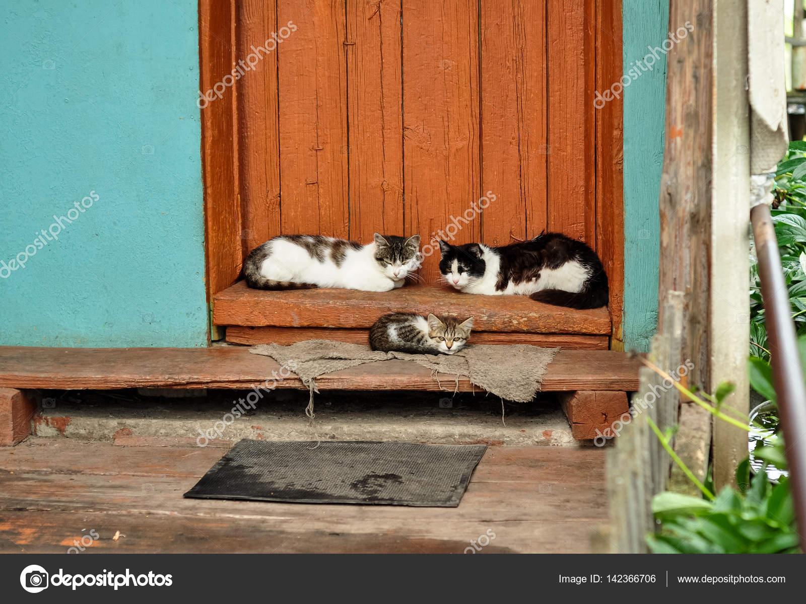 0099afd018f8 Χαριτωμένα γάτες βρίσκονται στη βεράντα του εξοχική κατοικία. Εξοχή σκηνή.  Ζωή στο χωριό —