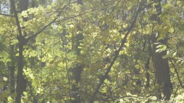 Dolly, Zeitlupe, Wind bewegt Äste der Bäume im Wald