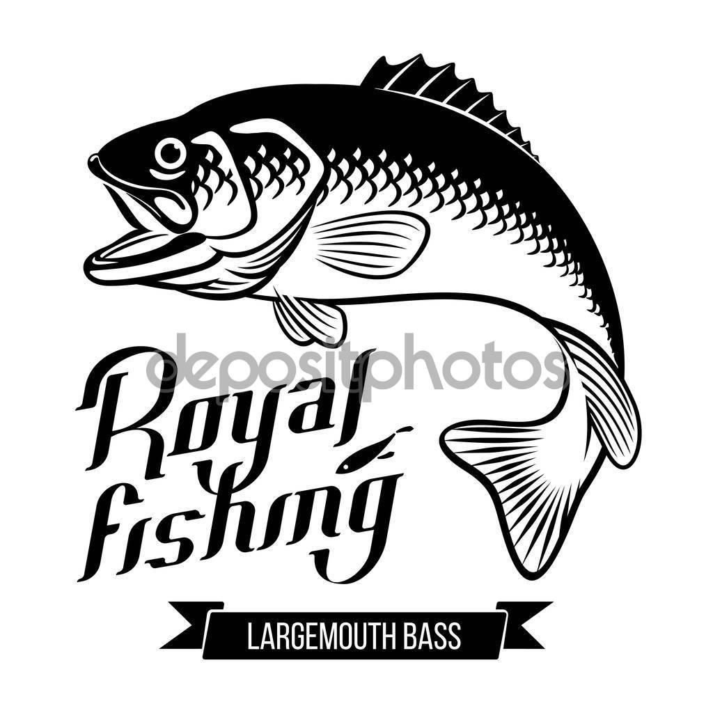 Largemouth Bass illustration