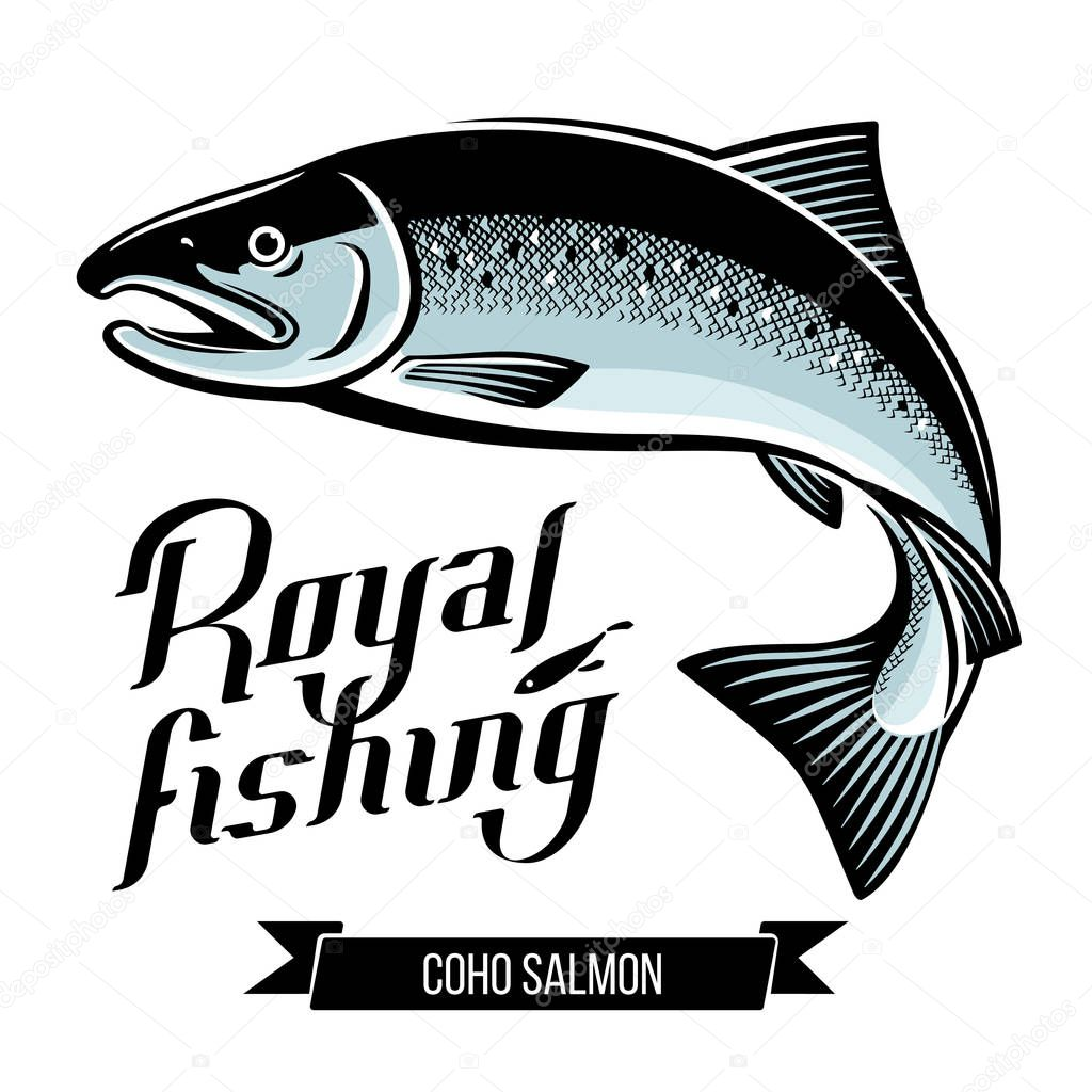 Coho Salmon fish vector illustration