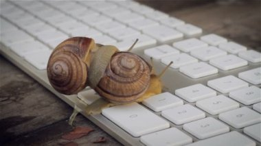 Closeup of paired snails crawling beside the computer keyboard. Metaphors for sex, porn site, Erotic Content on the Internet