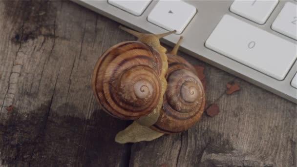 Nahaufnahme des gekoppelten Schnecken kriechen neben der Computer-Tastatur. Metaphern für Sex, Porno-Site, erotische Inhalte im Internet