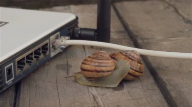Closeup of paired snails crawling beside Wi-Fi router. Metaphors for sex, porn site, Erotic Content on the Internet