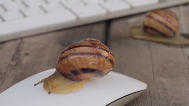 Dva šneky pomalu plazí u klávesnice počítače a jeden hlemýžď sedí na počítačovou myš. Metafora pomalý počítač pomalý Internet