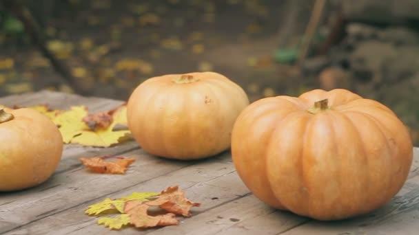 Lehněte si na dřevěný stůl mezi žluté spadané listí zralá dýně