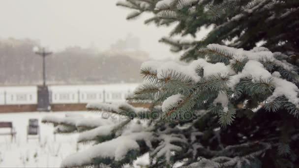 Giorno di inverno nevoso paesaggio nel Parco della città