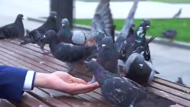 Pigeons eat out of your hand.