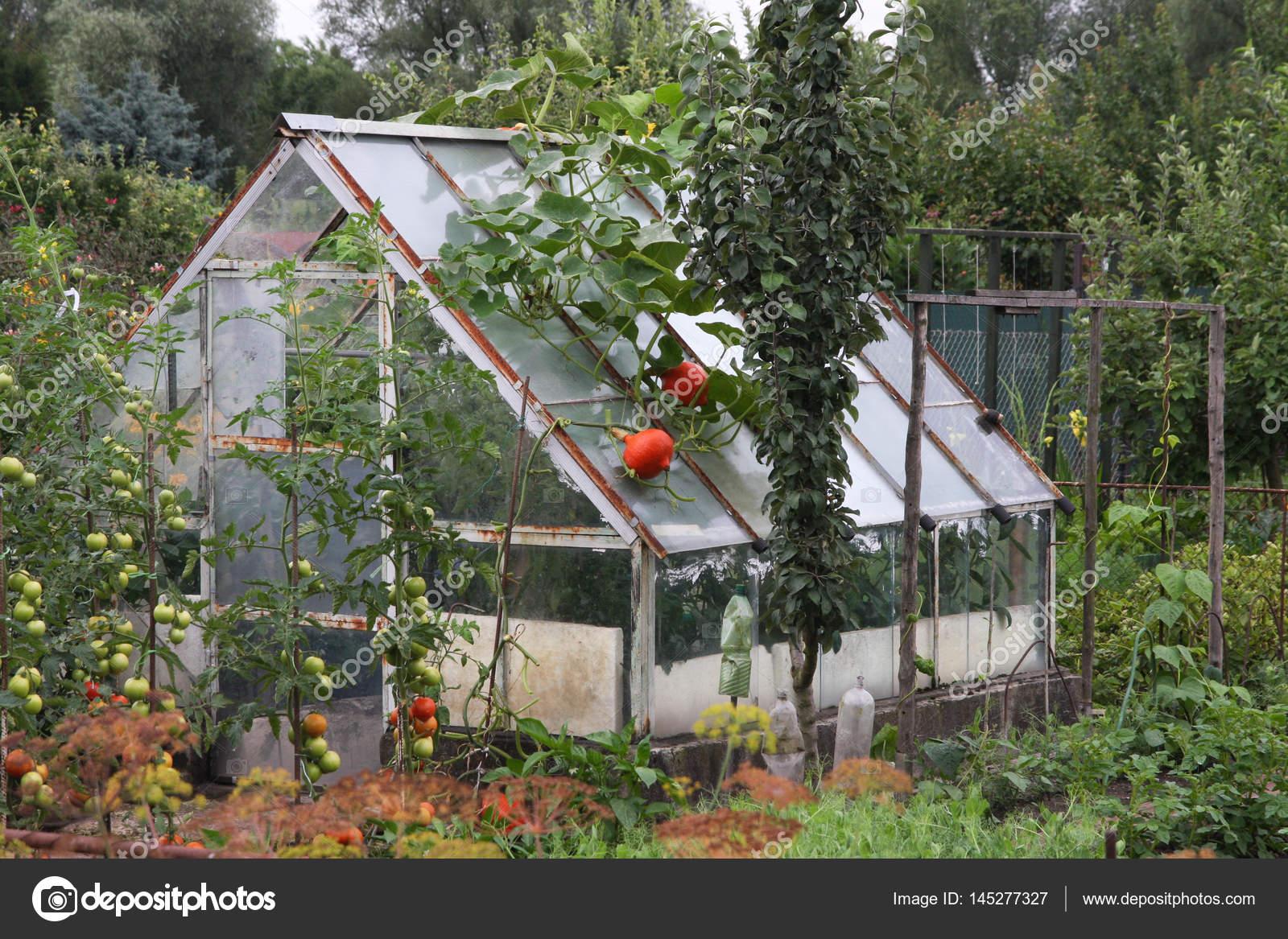 genug Gewchshaus Garten. Affordable Gewchshaus Garten With Gewchshaus EG25