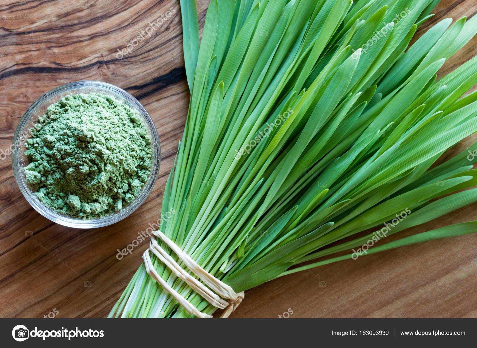 barley grass svenska