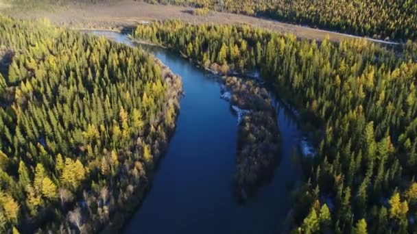 Altai Republic. Mountain landscape. Video from the air. Siberian taiga. Siberian forest. Siberian pine in the fall. The Altai mountains. Forest of the mountains. Yellow trees. The mountains in the fall. Landscapes Of Siberia. Mountains Of Russia 7